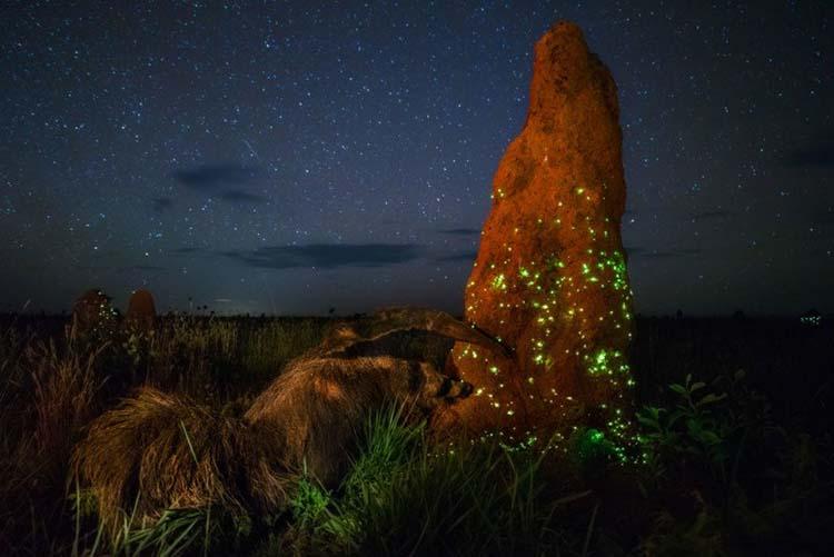 20幅野外生态摄影得奖照片,动植物世界震撼画面