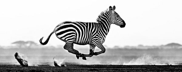 """黑白印""""象""""派:用黑白灰展现动物的美感与力量!"""