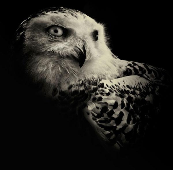 暗黑中黑白作品让动物目光展兽性